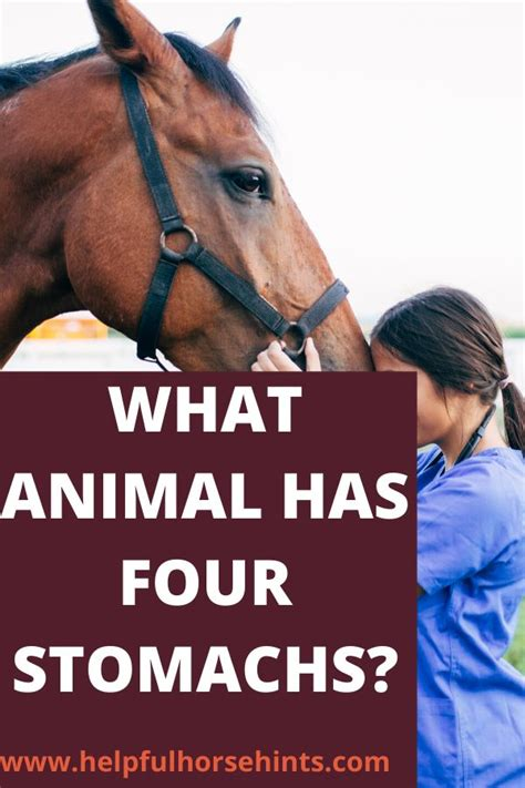 digestion horses ruminants they helpfulhorsehints
