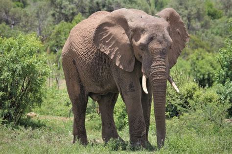 Jahresrückblick 2019 › Mayday Elefanten