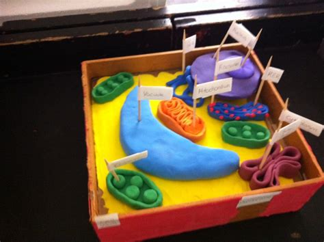 Amazing Greenfield School 3d Cell Model