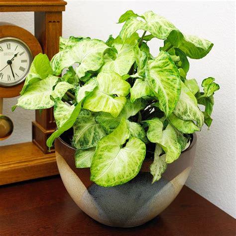Houseplants, Part Two  Achieve True Health