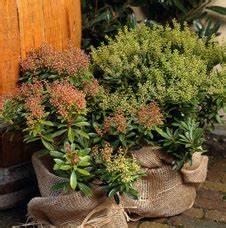 Winterharte Pflanzen Für Balkon : frostschutz f r den balkon ratschl ge f r nicht winterharte pflanzen ~ Somuchworld.com Haus und Dekorationen