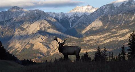exercises  prepare  hunting elk