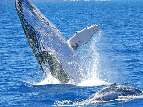 spring  perth  whales  wildflowers suma