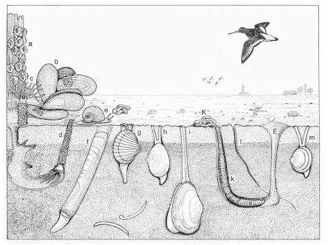 senckenberg world  biodiversity senckenberg research