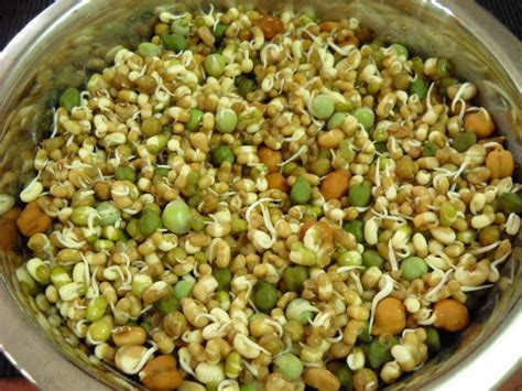 secrets  sprouted beans benefits preparation  recipes