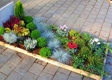Winterharte Blumen Für Kübel by Pflanzzensset Einzelgrab Sonne Pflanzen Versand Harro S