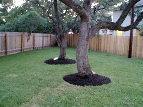 mulch around trees trees like to wear skirts made of