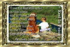 images  dog heaven  pet loss  pinterest