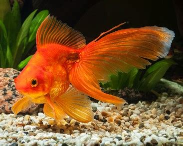 goldfish food  growth color  reviews