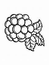 Coloring Blackberry Berries Cabbage Template Fruits Ausmalbilder Brombeere Printable Colouring Pokemon Malvorlagen Kostenlos Ausdrucken Zum sketch template