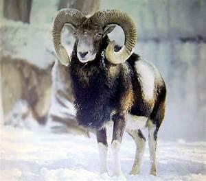 Azerbaijan Fauna
