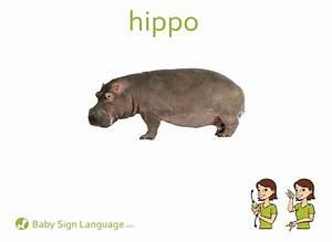 Gorilla Size Chart Hippopotamus Hippo