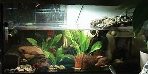 Aquarium Einrichten Anfänger : panzerwelten forum welche krabbe ist f r anf nger geeignet ~ Lizthompson.info Haus und Dekorationen