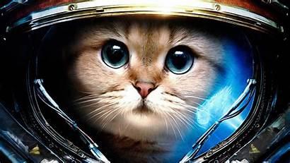Cat Cool Desktop Wallpapers Astronaut Backgrounds Wallpaperaccess