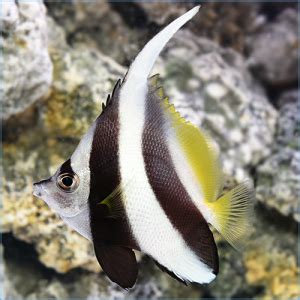 petes aquariums fish saltwater fish tropical