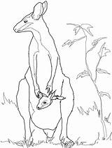 Animal Coloring Kangaroo Template Australian Wallaby Colouring Templates Rock Animals Outline Drawing Crafts Drawings Shapes Sketches Printable Mother Necked Stencils sketch template