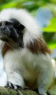 barkley foam posites: Singapore Zoo Animals List