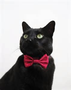 cat tie cat bow tie mr cupid
