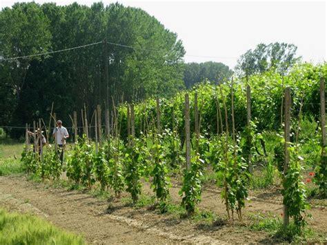 https://www.giardinaggio.it/ortofrutta/malattie-della-vite/mal-dell--esca-della-vite.asp