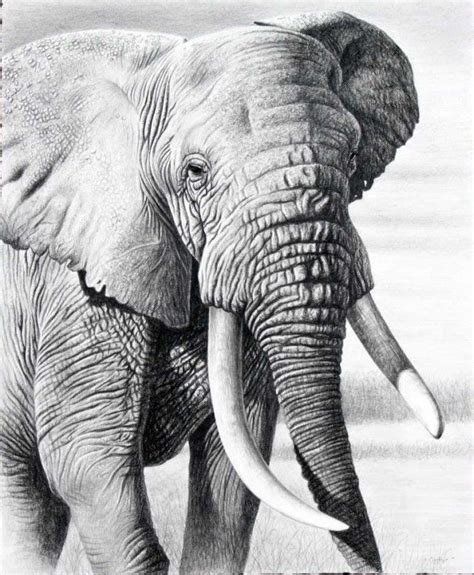 beautiful  realistic animal drawings