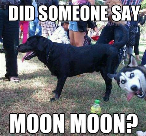 Moon Moon Meme - guy s wolf name moon moonmoon internet meme 18