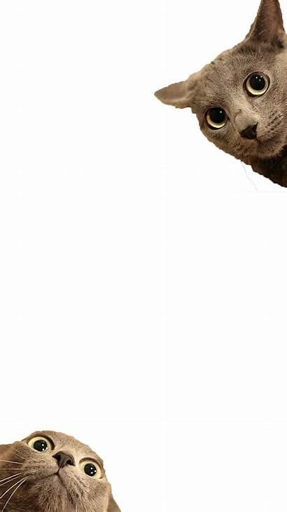Funny Cat Transparent Cats Filter Happy Pngio