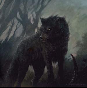 direwolf  wiki  ice  fire