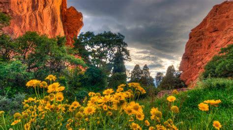 Garden Of The Gods Flowers flowers in the garden of the gods in colorado