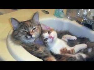 REALLY CUTE CATS!!!! - YouTube