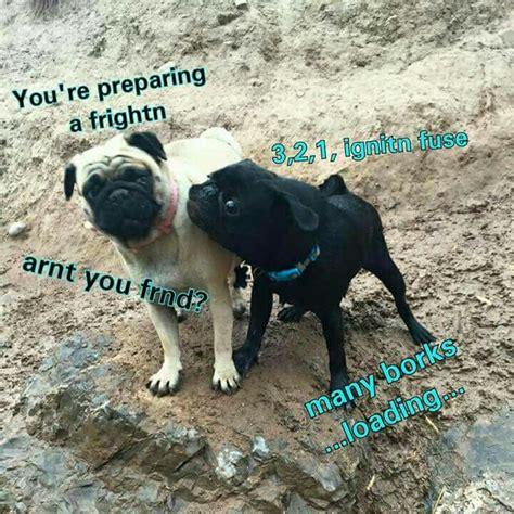 Bork Memes - 1000 images about bork memes on pinterest doge memes and what is this