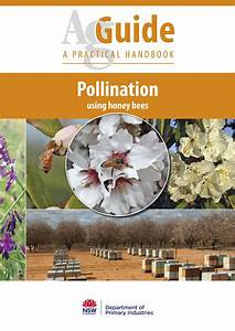 New Guide To Boost Bee Pollination