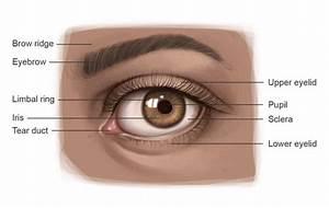 Jeff Searle  Drawing The Eye