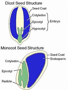 Seeds And Seed Germination
