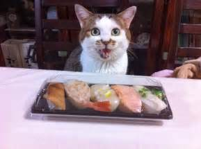 sushi cat sushi cat blueiskewl