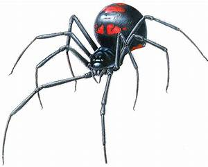 Black Widow Drawings - ClipArt Best