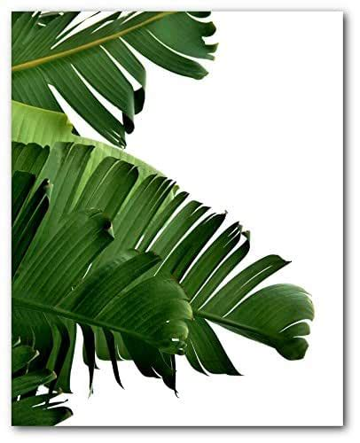 Palm leaf template palm tree leaf template printable palm paper craft pertaining to for young children in the direction of produce for palm 28 pics of substantial palm leaf template printable infovia internet printable habits at. Amazon.com: Banana Leaf Print, Tropical Palm Leaf, 8 x 10 Inches, Unframed: Handmade