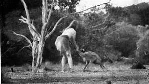 Pin Tasmanian-tiger-sightings-image-search-results on ...