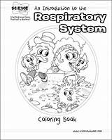 Respiratory System Coloring Drawing Printable Anatomy Sketch Pulmonary Library Circulation Popular Template Clipart Science Tags Getcolorings Getdrawings Clip Circle sketch template