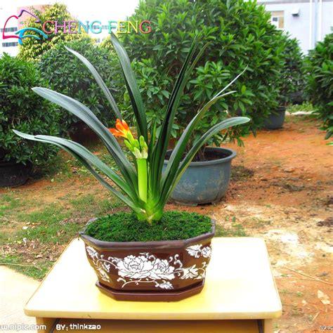 pot bonsai pas cher pas cher pot de fleur achetez des lots 224 petit prix pas cher pot de fleur en provenance de