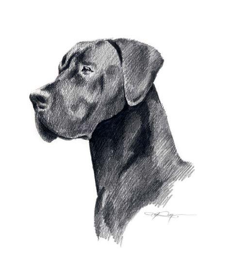 black great dane dog art print  artist dj rogers puppy