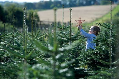 order real christmas tree where to buy real christmas trees in swansea wales 9116
