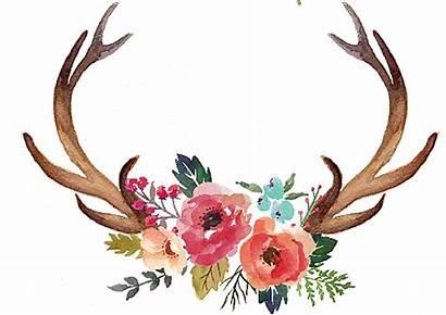 Deer Antlers Antler Flowers Clipart Transparent Clip