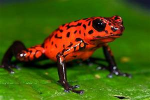 Animals and Plants - Tropical Rainforest