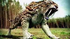 Saber Tooth Tiger Vs Dire Wolf | www.pixshark.com - Images ...