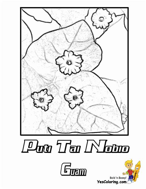 usa flower coloring pages penn wyoming usa islands