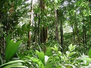 10 Interesting Amazon Rainforest Facts | My Interesting Facts