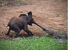 10 unglaubliche TierFotos Bilder, Videos lolde
