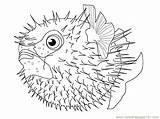 Fish Puffer Coloring Pufferfish Fishes Drawing Printable Cartoon Template Drawings Coloringpages101 Sketch 69kb 600px Pdf Getdrawings Getcolorings sketch template