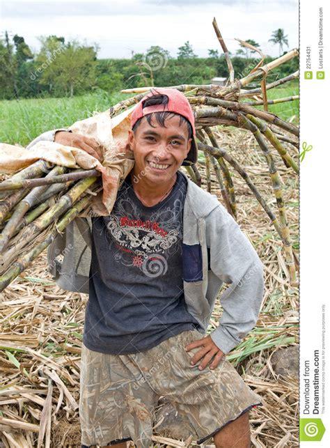 sugar cane worker editorial photo image