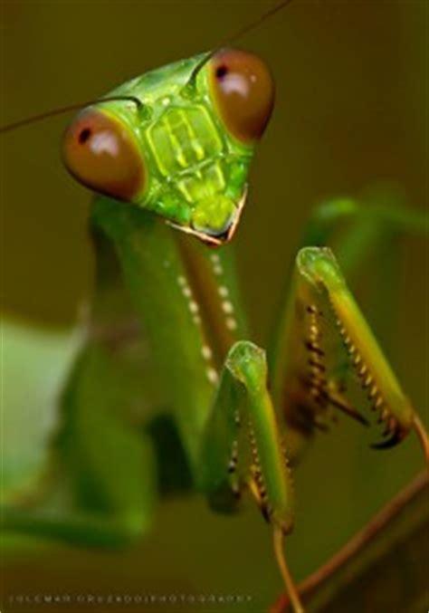 praying mantis jigsaw puzzle